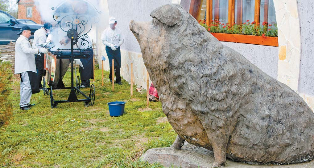Пам'ятник свині мангалиці