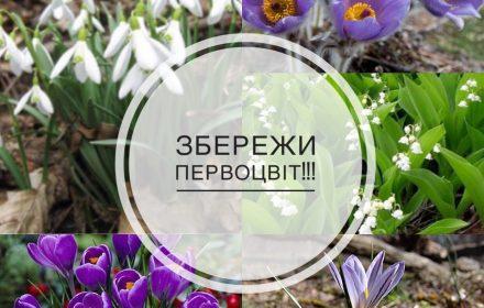 першоцвіти