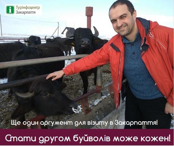 5 аргументов, чтобы посетить ферму буйволов в Закарпатье