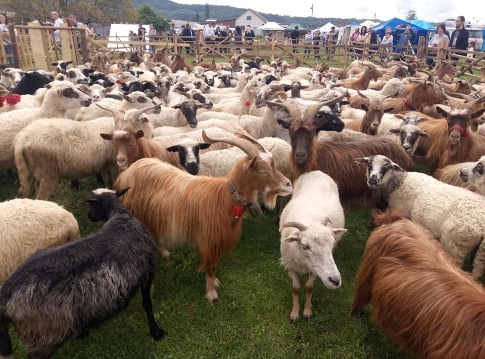 асоціація вівчарів хустщини