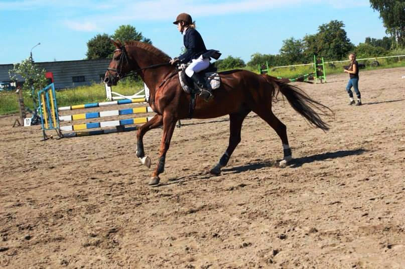 Школа верхової їзди в Ужгороді – Lacky Horse