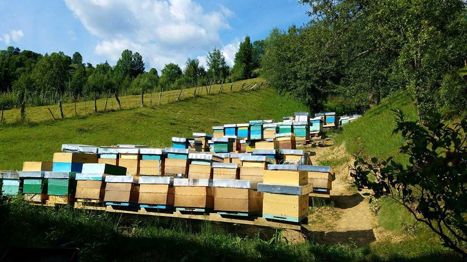 Фестиваль меду в Колочаві, тур маршрути – новинки 2020 року