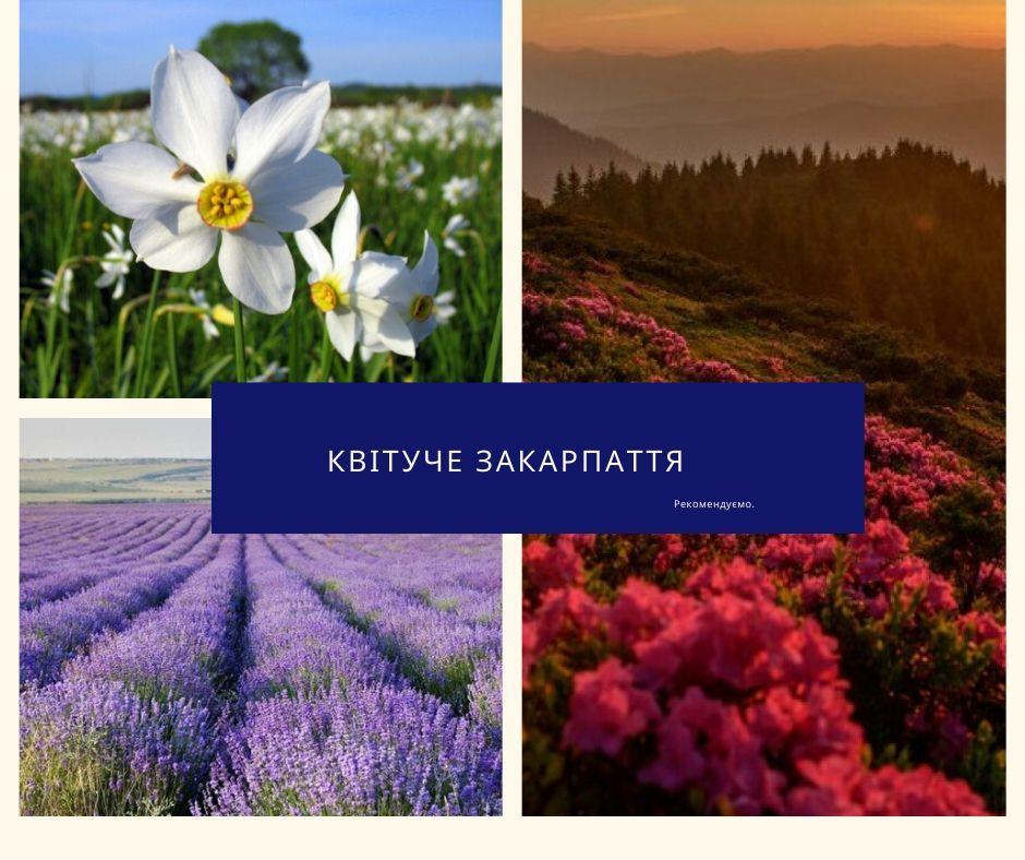 Улюблене Закарпаття: ТОП 5 місць для любителів квітів