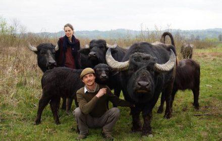 буйволи долина нарцисів