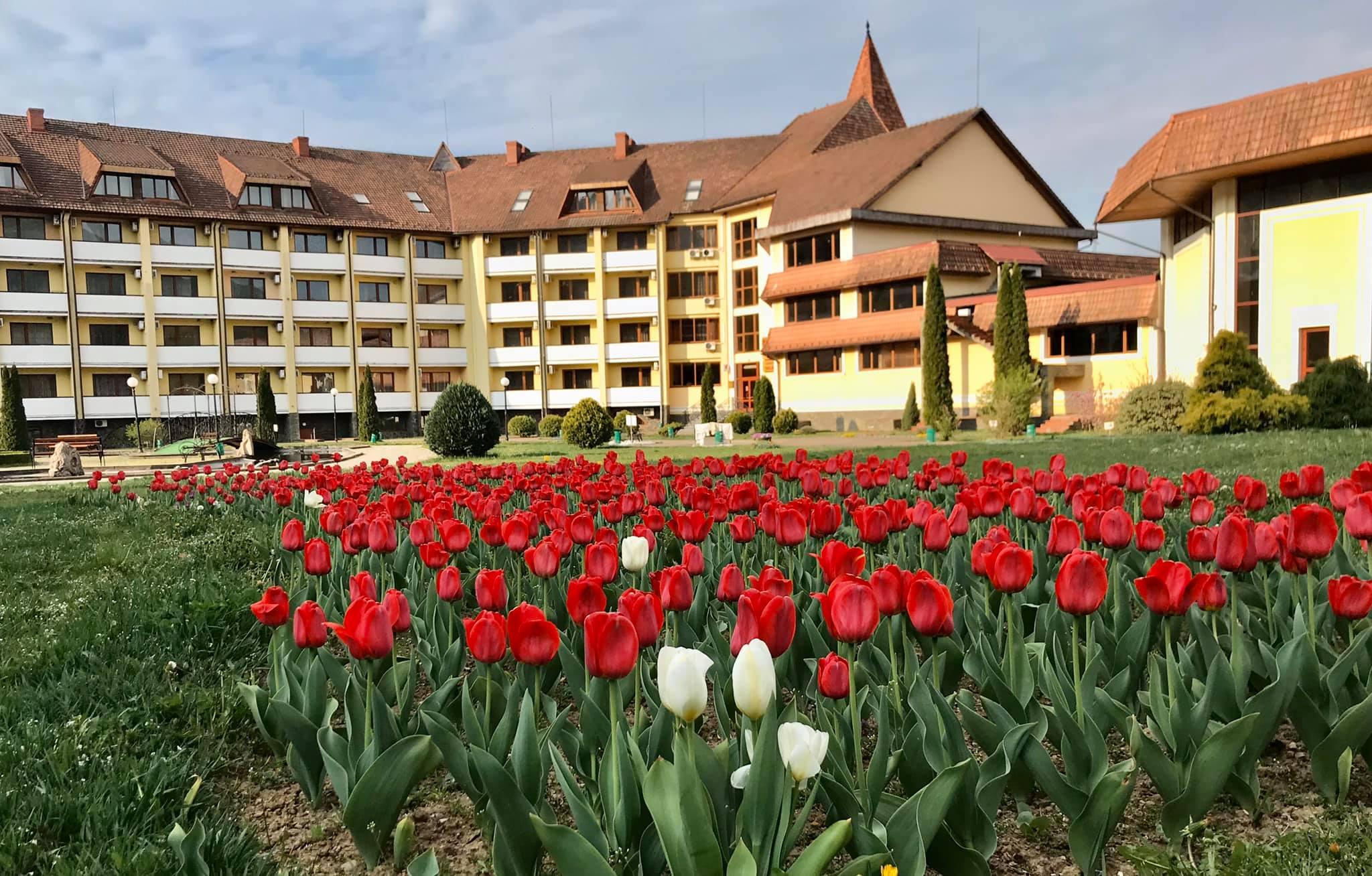 """На клумбах санаторію """"Квітка полонини"""" було висаджено понад тридцять сортів тюльпанів. А ще ж сусідують з ними і гіацинти, нарциси, барвисті братки. Квітнуть у санаторному парку, звісно ж, і сакури, і бузок, і красуня-магнолія. Почергово розквітають й інші дерева та декоративні кущі."""