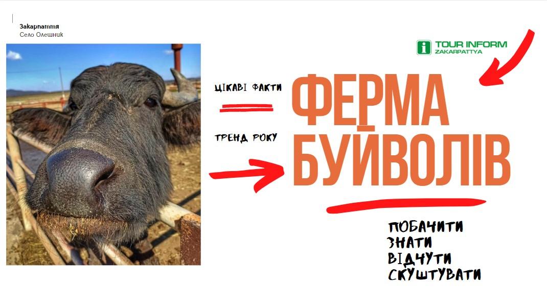 Тут вирощують унікальних тварин - карпатських буйволів та виготовляють молочні продукти з їх молока, якщо ви хочете скуштувати на смак справжню моцарелу, то вам сюди.