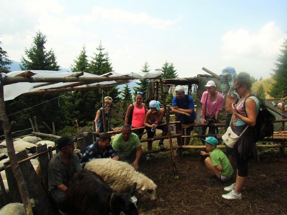 Туристів у Карпатах вчать вівчарству та виготовляти бринзу