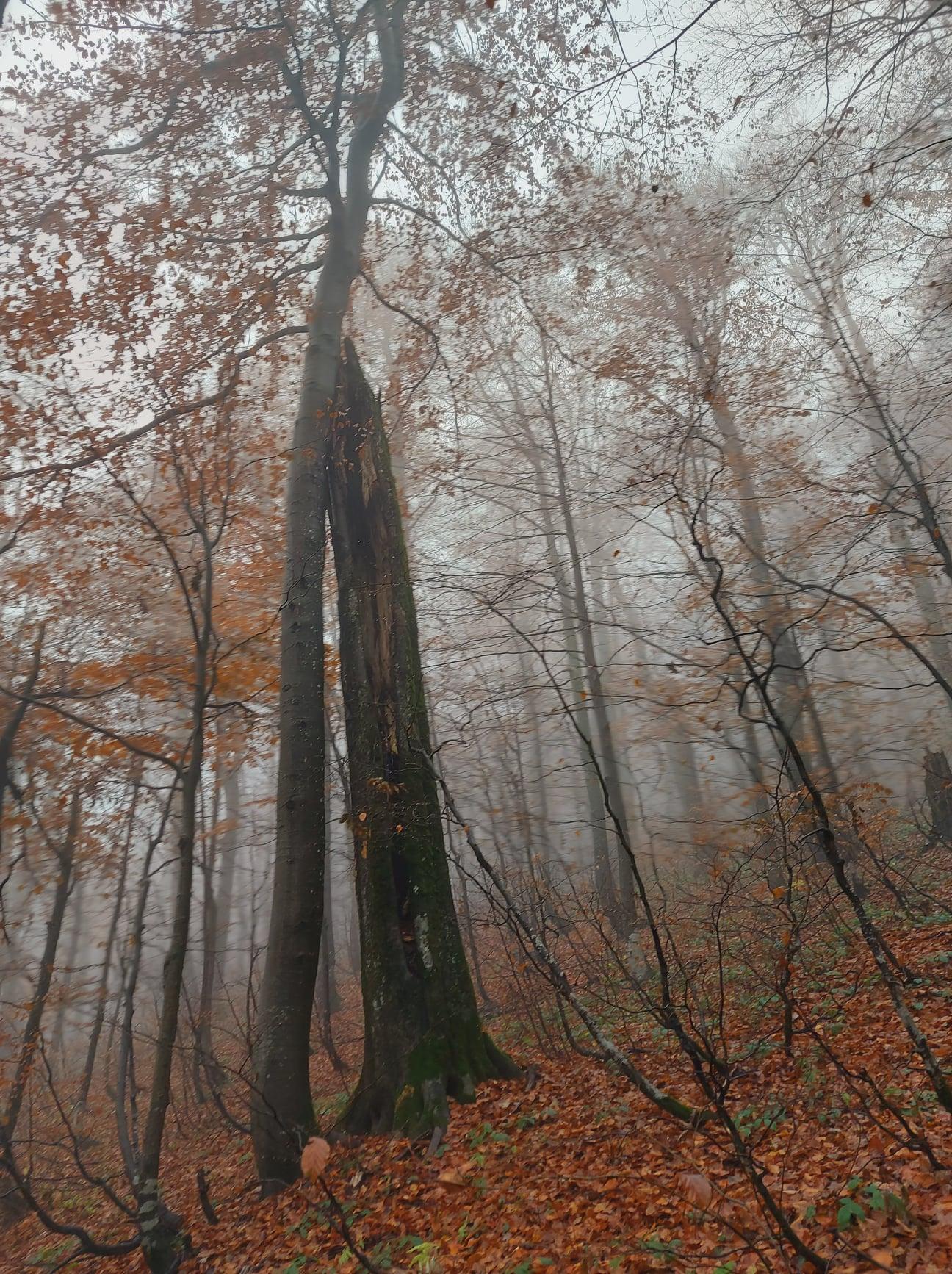 Ужанський природний парк