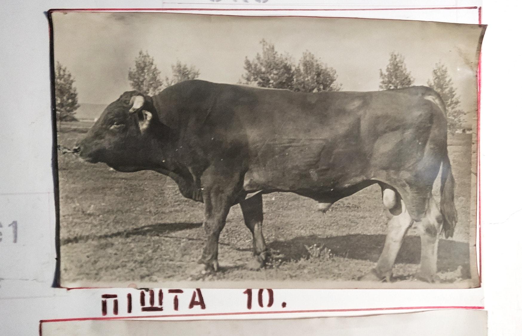 Унікальна та пізнавальна екскурсія в Мукачево від Максима Адаменко. Ви потрапите у світ генетики, біології та дізнаєтесь цікаві факти, спростуєте фейки та позбудетесь стереотипів.