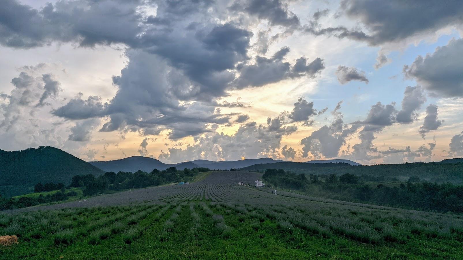 Куди поїхати у липні? Лавандова гора у Перечині