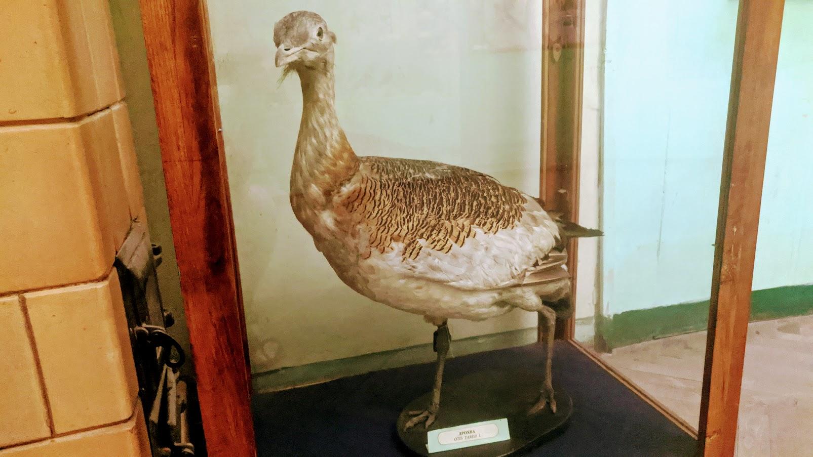 Загадковий птах у експозиції ужгородського замку